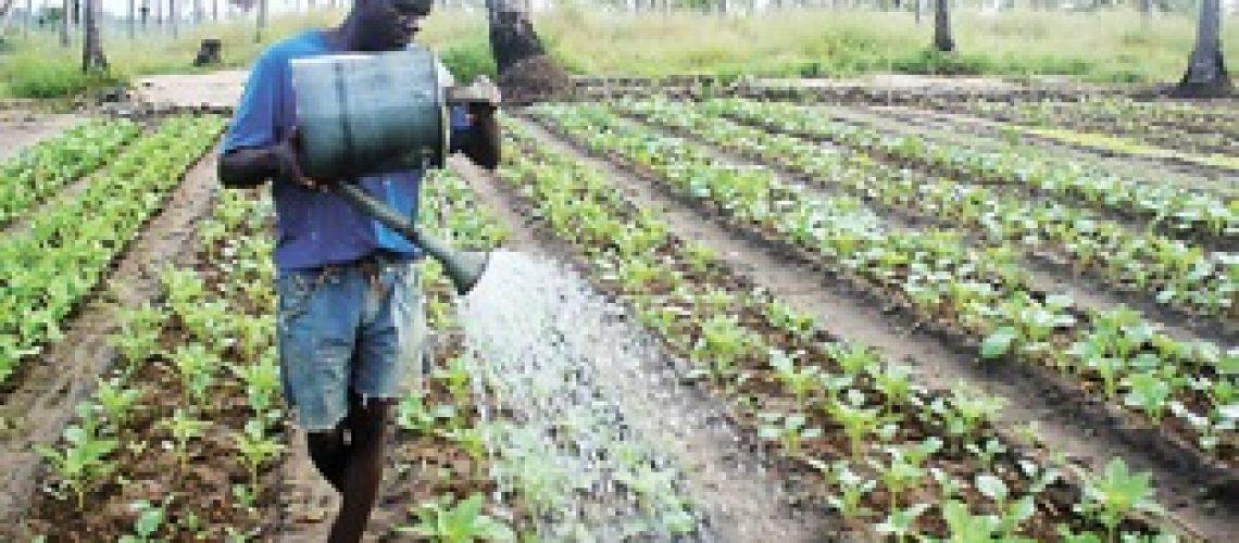 Agricultura familiar não tem sido importante para o Governo porque não é negócio para elites e não dá comissões