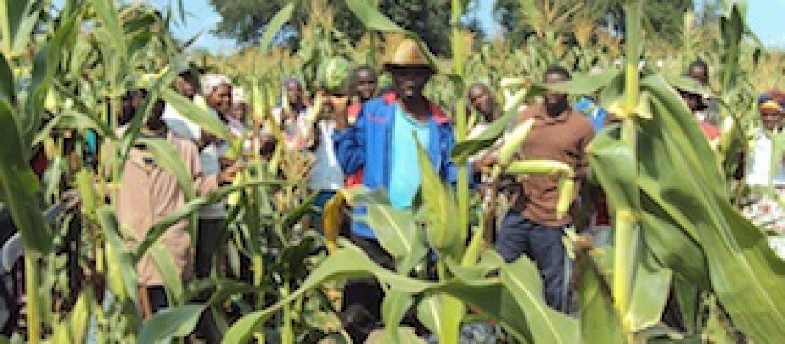 FAO e Governo lançam mais um projecto para aumentar a produção agrícola
