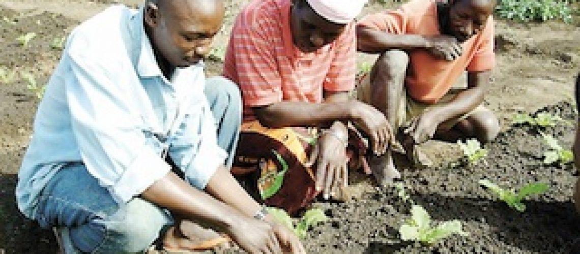 Em Moçambique a agricultura não alimenta o povo mas enriquece governantes e investidores estrangeiro