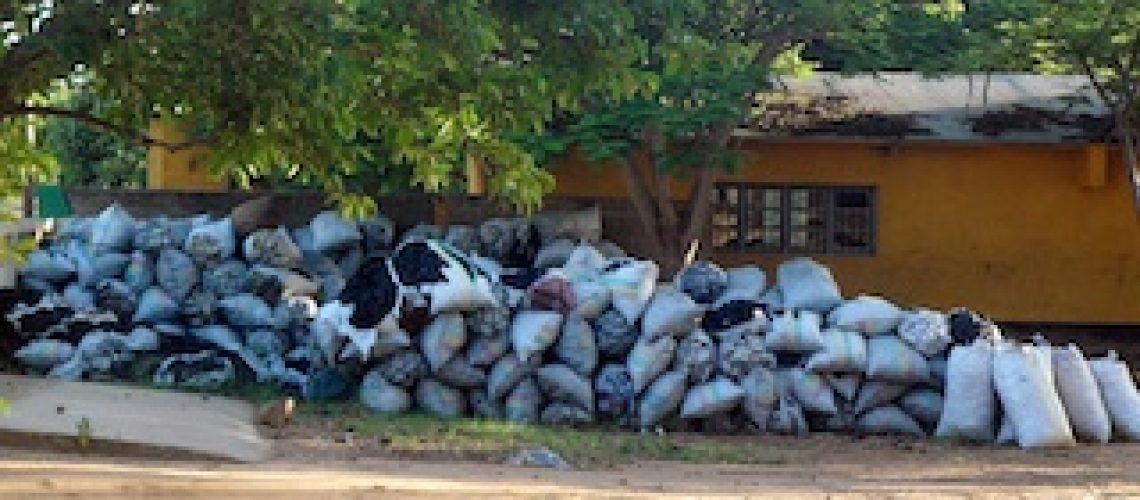 Há incapacidade de conter o desmatamento por conta da exploração de lenha e carvão em Meconta