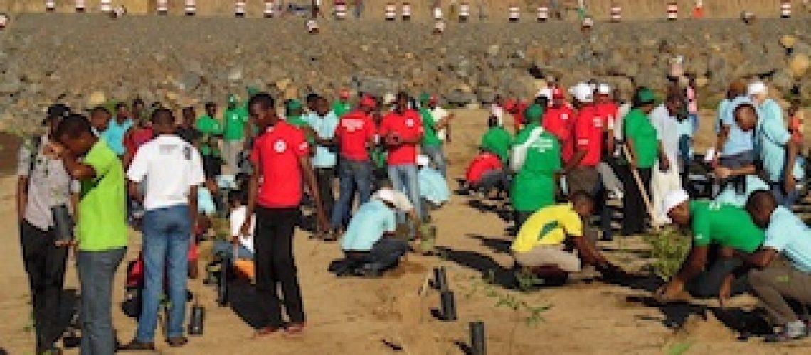 Plantadas casuarinas e eucaliptos para se travar a erosão no Licungo em Mocuba