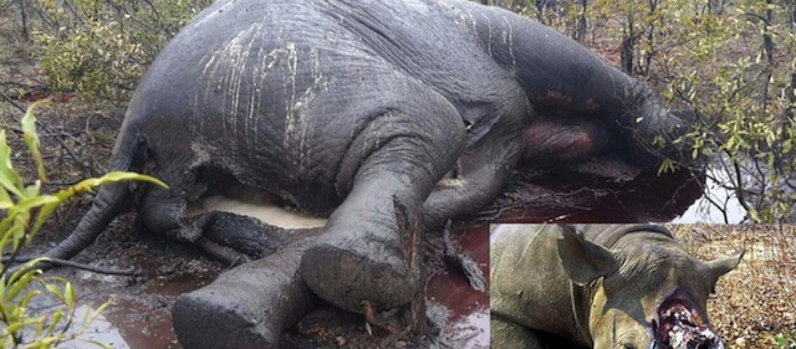 """Parlamento """"esconde"""" Lei que pune traficantes e compradores da caça furtiva em Moçambique"""