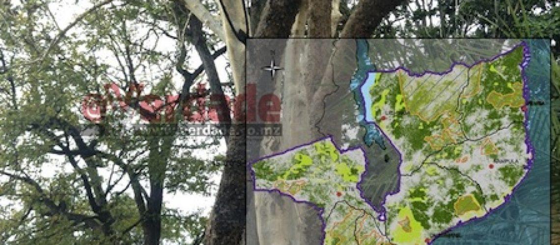 MITADER prolonga proibição da exploração das madeiras Pau-ferro