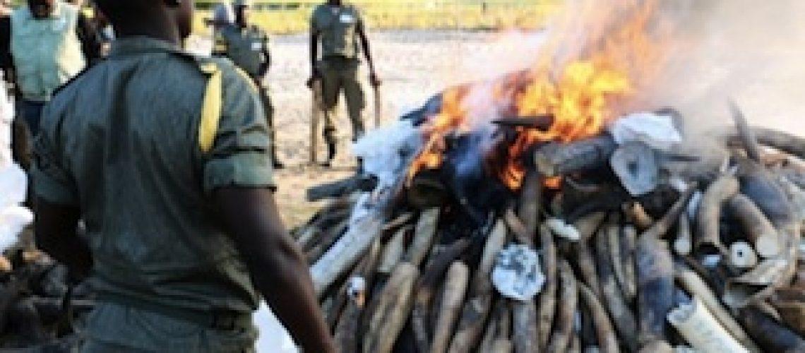 Cerca de três centenas de detidos por caça furtiva em Moçambique mas nenhum é mandante