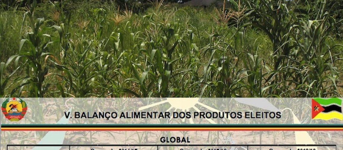 Não é verdade que existam excedentes na produção de milho em Moçambique