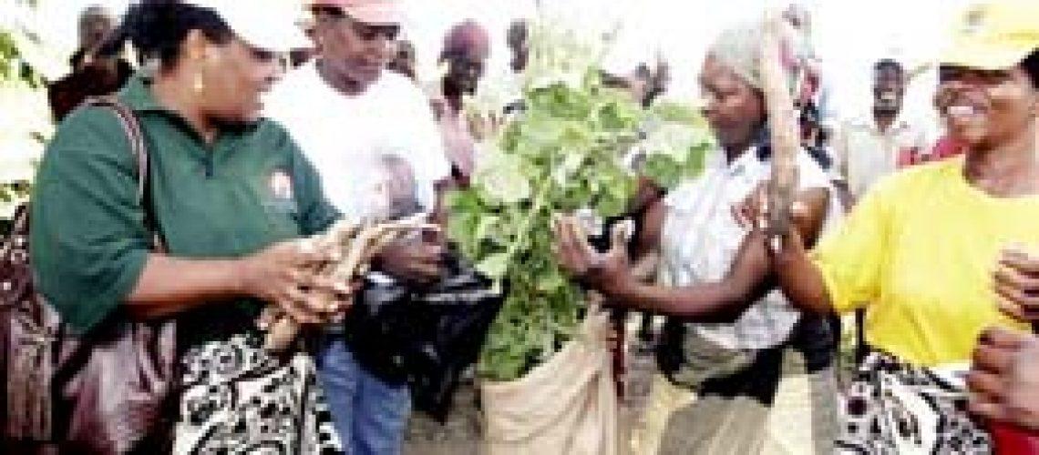 Agro-negócio: A 'verde' lição da mulheres