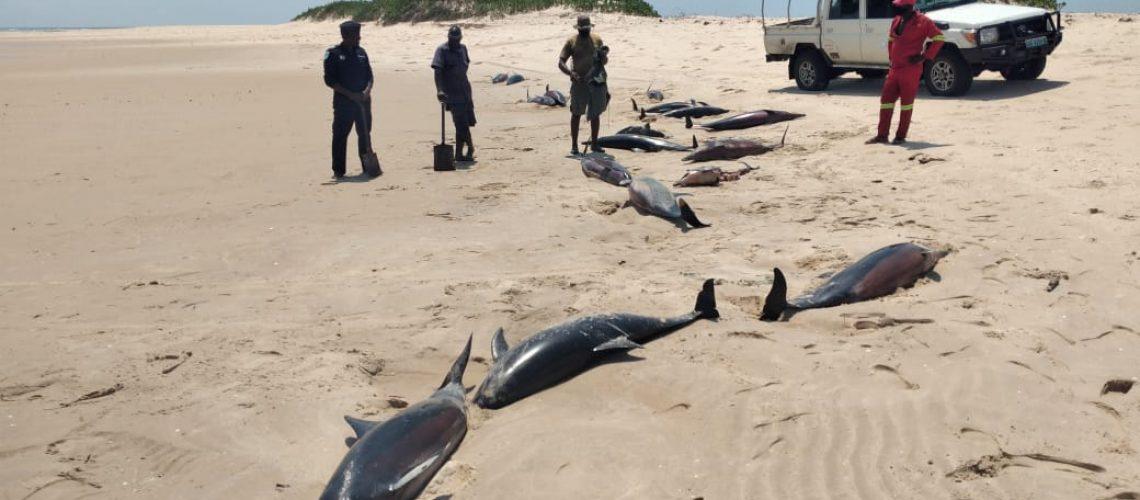 pnab-golfinhos1